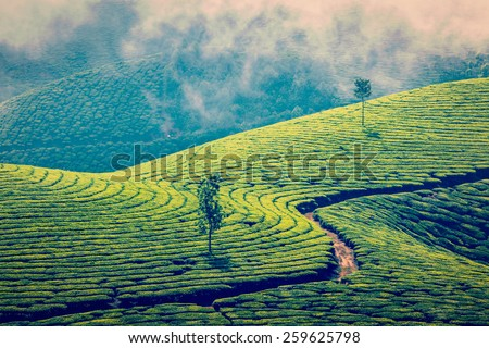 Vintage retro effect filtered hipster style image of Kerala India travel background - green tea plantations in Munnar, Kerala, India - tourist attraction - stock photo