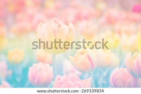 Vintage retro of tulips flower in soft color and blurry style for background with pastel tone. - stock photo