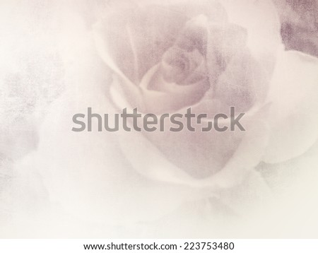 Vintage rose - stock photo