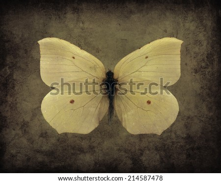 Vintage sepia butterfly on a grunge background - stock photo