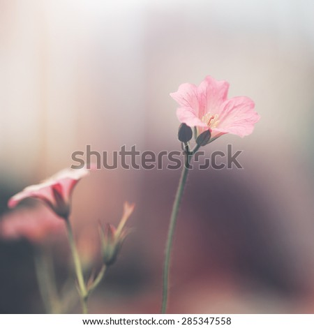 vintage soft pink flowers - stock photo