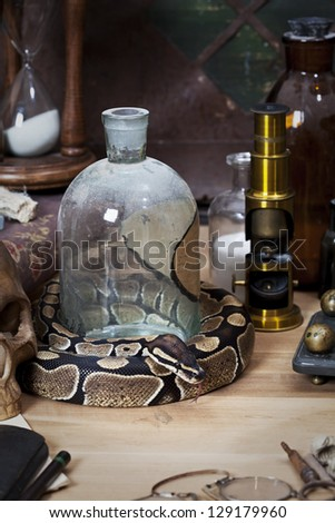 Vintage still life with Royal Python snake
