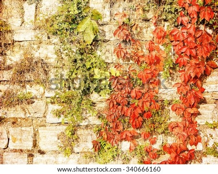 Vintage stone wall with autumnal red leaves. - stock photo