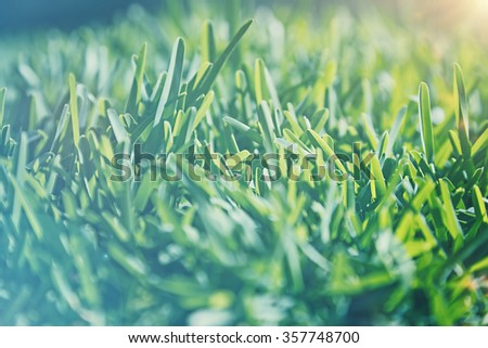 Vintage style background, cinematic look photo of a green grass field in sunlight, old fade effect,  shallow dof, natural dreamy image - stock photo