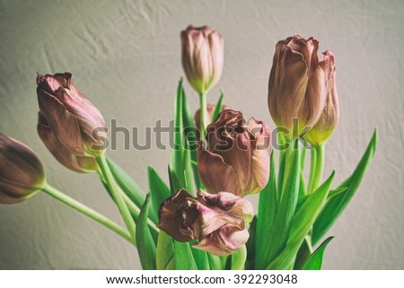 Vintage style faded bunch tulips flowers