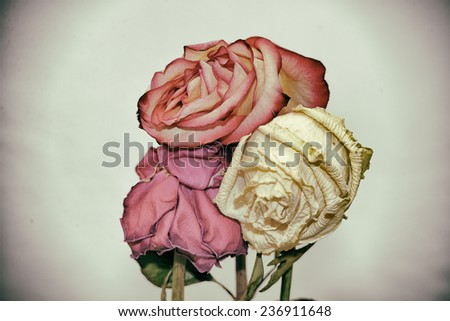 Vintage style faded three rose flowers - stock photo