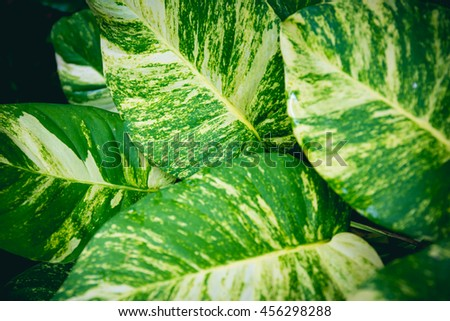 vintage style green fresh. green leaves background with. - stock photo