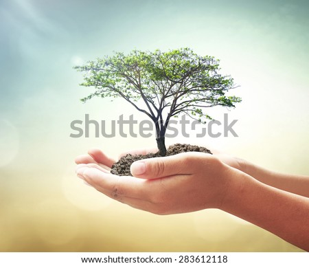 Vintage style. Human hands holding big plant with soil on blurred abstract beautiful sea or ocean or forest or desert over colorful sunset background. Ecology concept. World Environment Day concept. - stock photo