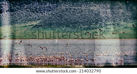 Vintage style image of a flamingo colony in the Ngorongoro Crater, Tanzania - stock photo