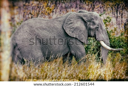 Vintage style image of a gigantic male african elephant in the Kruger National Park, South Africa - stock photo