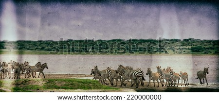 Vintage style image of a group of zebras at Lake Ndutu in the Serengeti National Park, Tanzania - stock photo