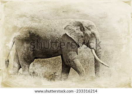Vintage style image of a huge African elephant bull in the Ngorongoro Crater, Tanzania - stock photo
