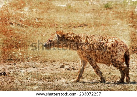 Vintage style image of a spotted hyena in the Ngorongoro Crater, Tanzania
