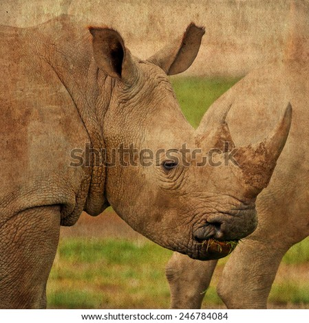 Vintage style image of a White rhinoceros or (Ceratotherium simum) in Lake Nakuru National Park, Kenya. The white rhinoceros is one of the five species of rhinoceros that still exist.