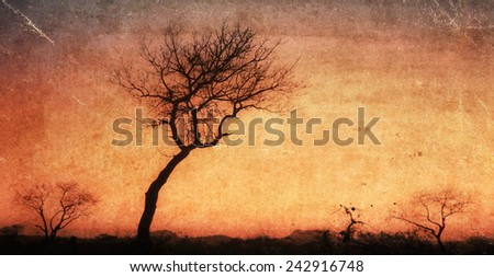 Vintage style image of African sunset in the Kruger National Park, South Africa