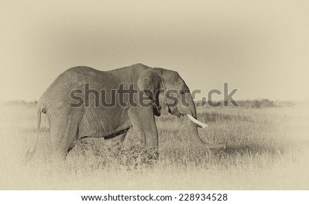 Vintage style image of an African elephant in the Serengeti National Park, Tanzania - stock photo