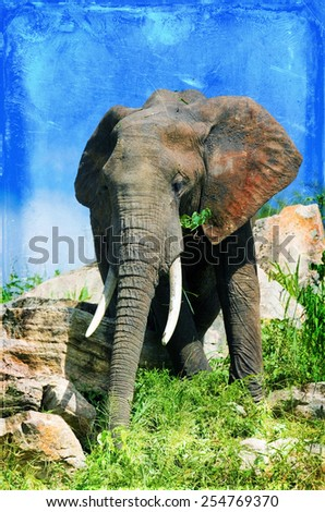Vintage style image of an African elephant in the Tarangire National Park, Tanzania - stock photo