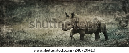 Vintage style image of awWhite rhinoceros or square-lipped rhinoceros (Ceratotherium simum) baby in Lake Nakuru National Park, Kenya.  - stock photo