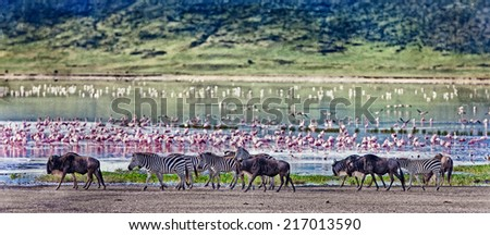 Vintage style image of zebras and wildebeests walking beside the lake in the Ngorongoro Crater, Tanzania, flamingos in the background - stock photo