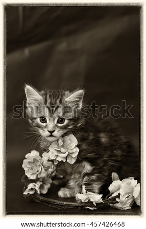 Vintage style kitten - stock photo