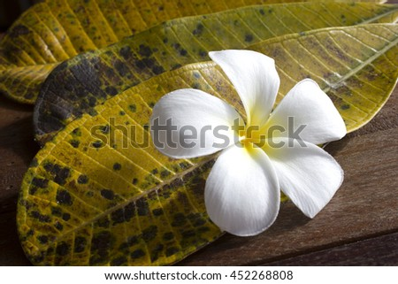 vintage style of plumeria flower with three leaf on the wooden background
