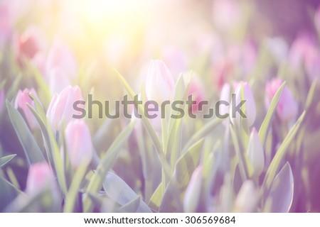 pretty background photos