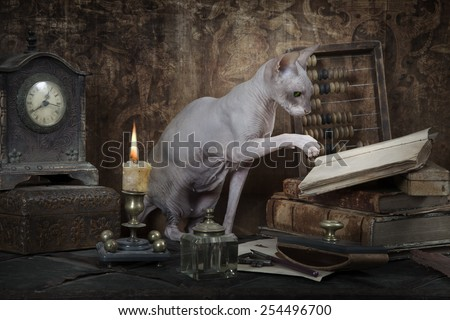 Vintage styled photo of Don Sphinx cat reading the book - stock photo