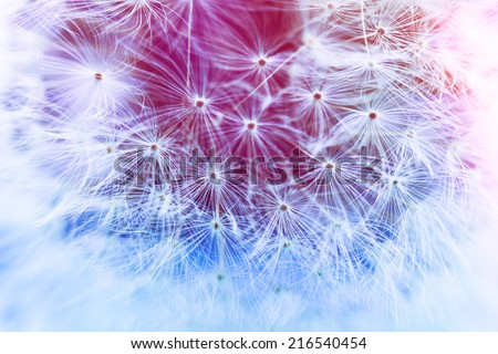 Vintage stylized photo of dandelion in soft focus - stock photo
