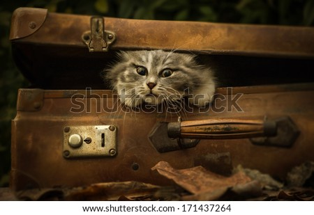 vintage suitcase with cat puppy - stock photo