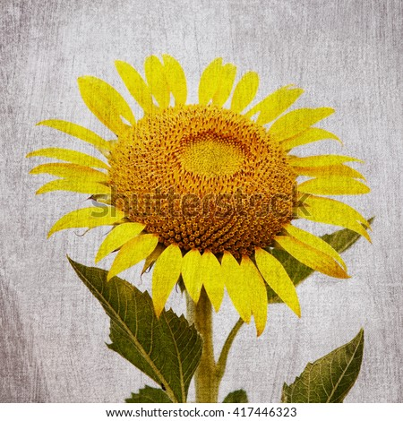 Vintage Sunflower Background Stock Photo Royalty Free 417446323