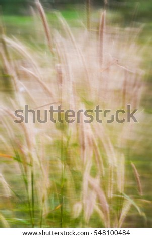 vintage sunset of tropical grass flower on sunset for background