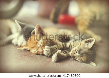 Vintage Sweet moment A group of different kitten sleeping on the floor.In selective focus. - stock photo