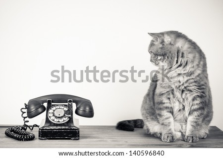 Vintage telephone and big cat on table sepia photo - stock photo