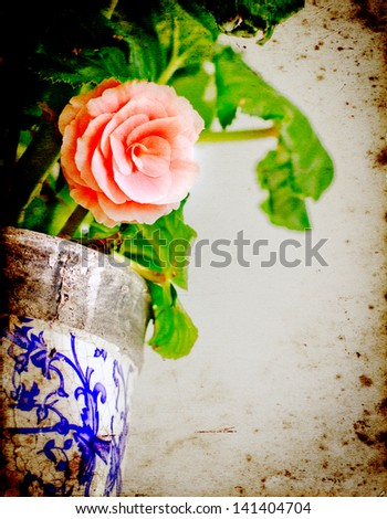 Vintage textured card with miniature Rose house plant in flower pot - stock photo