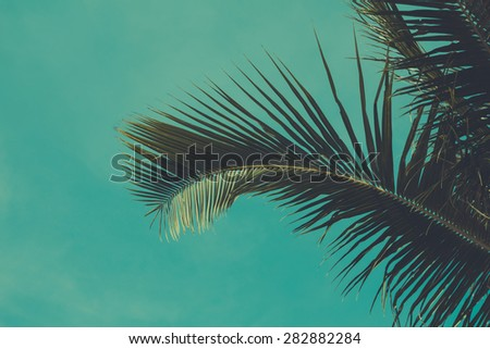 Vintage toned palm tree leaf over sky background - stock photo