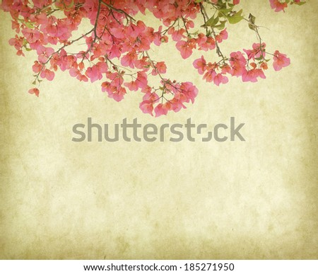 vintage wallpaper background with Bougainvillea flowers