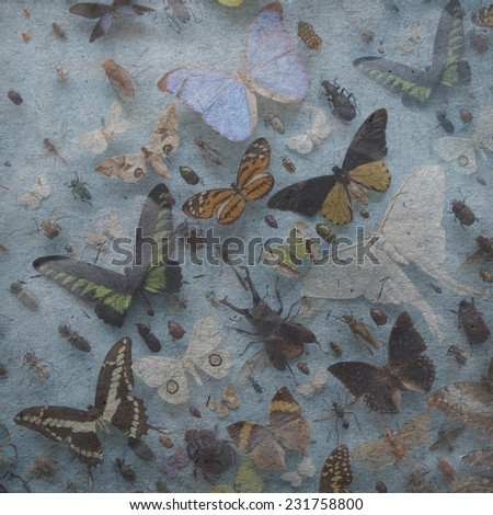 vintage wallpaper background with butterfly, beetle; bug, - stock photo