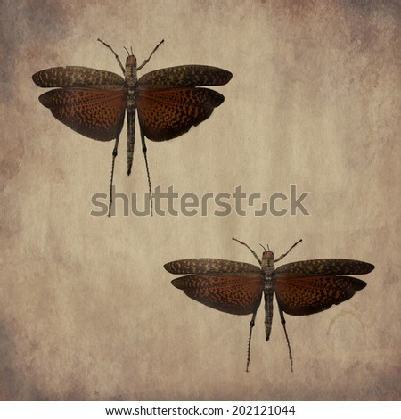 """vintage wallpaper background with butterfly """"tropidains dux"""" Peru - stock photo"""