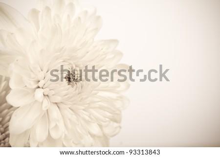 Vintage White Flower - stock photo