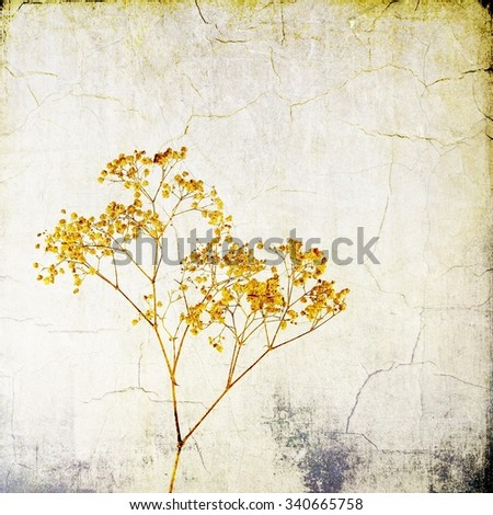 Vintage wild herbs on cracked background - stock photo