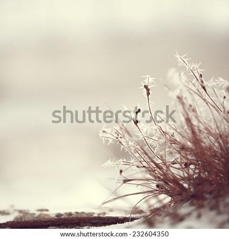 vintage winter hoarfrost grass  - stock photo