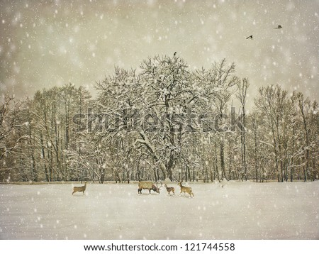 vintage winter photography - stock photo