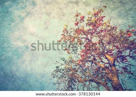 Vintage with Butea monosperma flower - stock photo