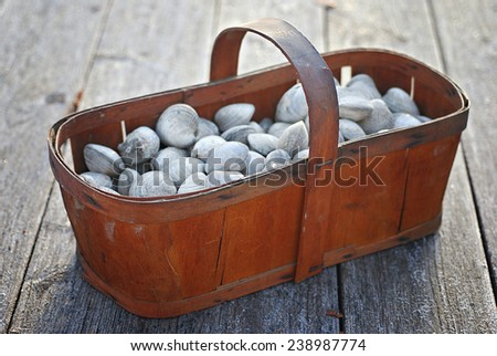 Vintage wood basket filled with fresh live clams - stock photo
