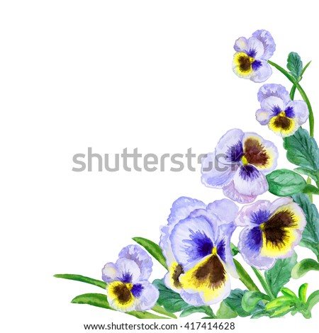 Viola tricolor watercolor. Johnny Jump up, heartsease, heart's ease, heart's delight, tickle-my-fancy, Jack-jump-up-and-kiss-me, come-and-cuddle-me, three faces in a hood, or love-in-idlenes - stock photo