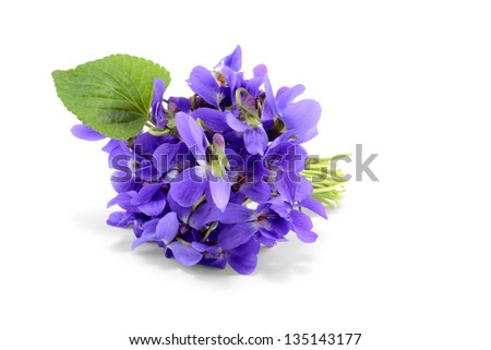 Violet bouquet isolated on white background