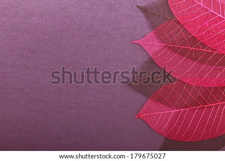 Violet cardboard background with ornate leaves