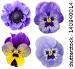 Violet collage flovers - stock photo