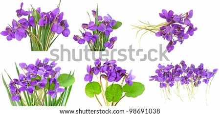 violet collection - stock photo