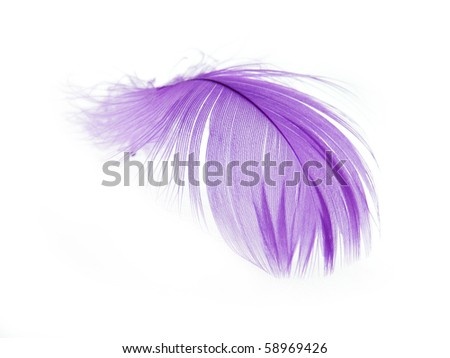 Violet Feather in soft focus view. Close-Up. With white background - Isolated. - stock photo